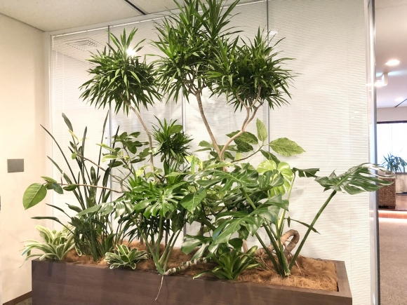 【SYNTH(シンス)堂島ブログ】新しい植物がSYNTH(シンス)にやってきました!part 19