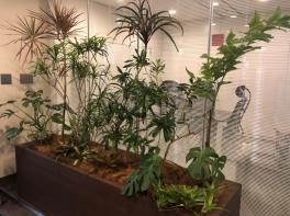 新しい植物がSYNTHにやってきました!part2