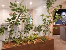 新しい植物がSYNTHにやってきました!part6