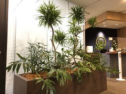 【SYNTH(シンス)堂島ブログ】新しい植物がSYNTH(シンス)にやってきました!part 15