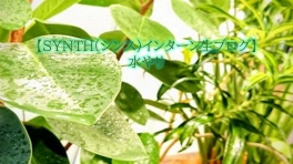 【SYNTH(シンス)インターン生ブログ】水やり