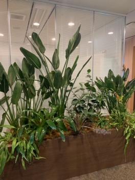 【SYNTH(シンス)堂島ブログ】新しい植物がSYNTH(シンス)にやってきました!part 16