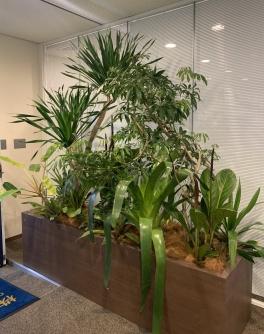 【SYNTH(シンス)堂島ブログ】新しい植物がSYNTH(シンス)にやってきました!part 17