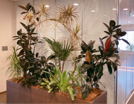 【SYNTH(シンス)堂島ブログ】新しい植物がSYNTH(シンス)にやってきました!part 18