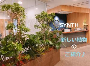 SYNTH(シンス)ブログを更新しました(新しい植物がSYNTHにやってきました!part10)