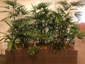 SYNTHブログを更新しました(新しい植物がSYNTH(シンス)にやってきました!part 13)