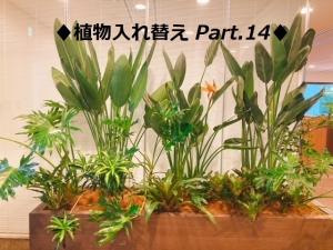 【SYNTH(シンス)堂島ブログ】を更新しました(新しい植物がSYNTH(シンス)にやってきました!part 14)