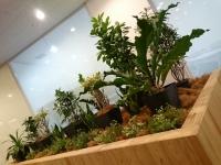 SYNTH四日市ブログを更新しました(植栽でリラックス~緑溢れるオフィス~)