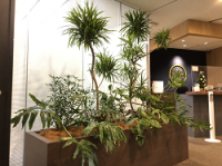 【SYNTH(シンス)堂島ブログ】を更新しました(新しい植物がSYNTH(シンス)にやってきました!part 15)