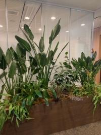【SYNTH(シンス)堂島ブログ】を更新しました(新しい植物がSYNTH(シンス)にやってきました!part 16)